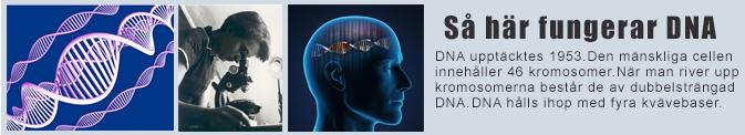 Vad ör DNA - vi förklarar DNA-analys, DNA-tester och genetiken bakom allting!
